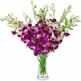 12 Purple Orchids in vase