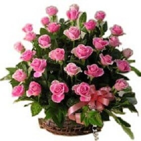 20 Beautiful Pink Rose i...