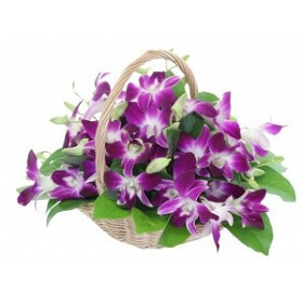 12 Purple Orchids in Bas...