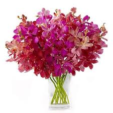 20 Mix  Orchids flowers ...